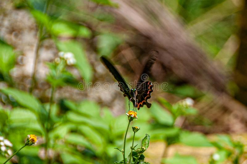 Colorful butterfly on salty grass. The ecologically rich Tainan Lion Mountain has a variety of insects, butterflies, dragonflies and birds. They rest on treetops stock image