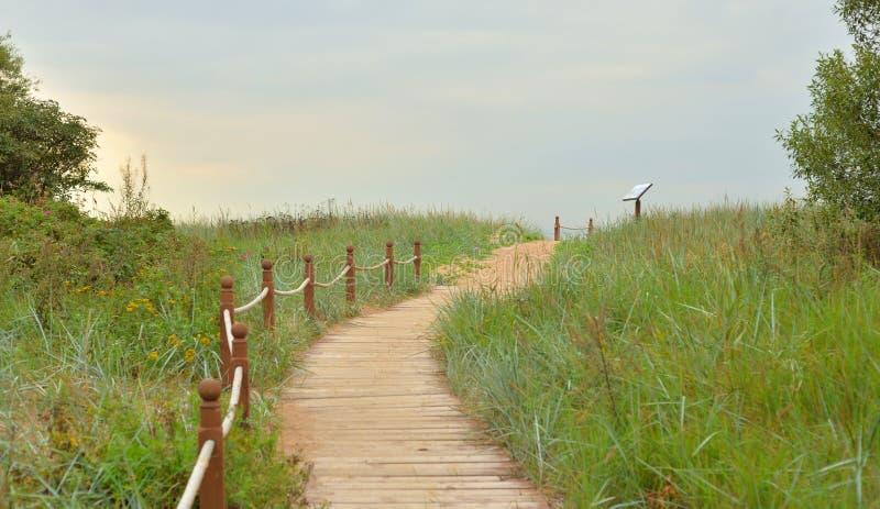 Ecologische weg op gebied bij de zomer royalty-vrije stock foto
