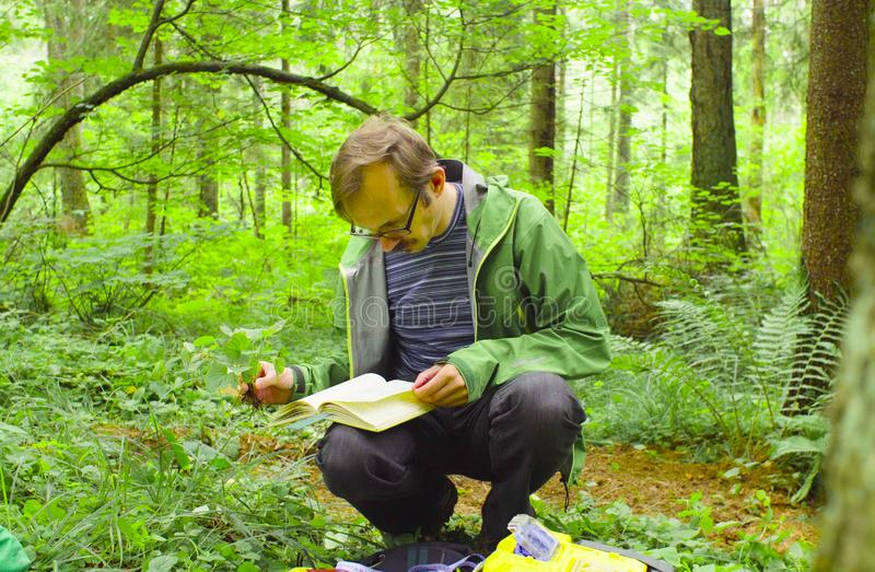 The ecologist in a forest examining plant royalty free stock photos
