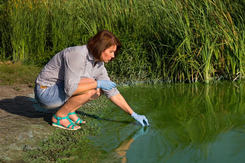 Ecologist takes samples of river water with green algae for laboratory testing. Woman ecologist takes samples of river water with green algae for laboratory stock photos