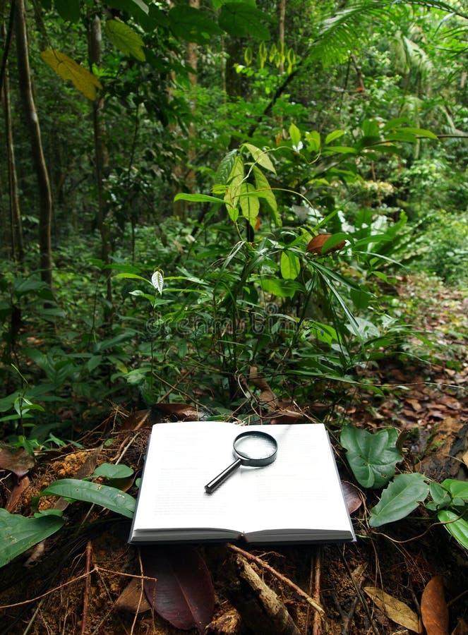 Ecologista en el concepto del trabajo imágenes de archivo libres de regalías
