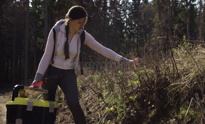 Ecologo che esamina i giovani alberi sulla registrazione immagini stock libere da diritti