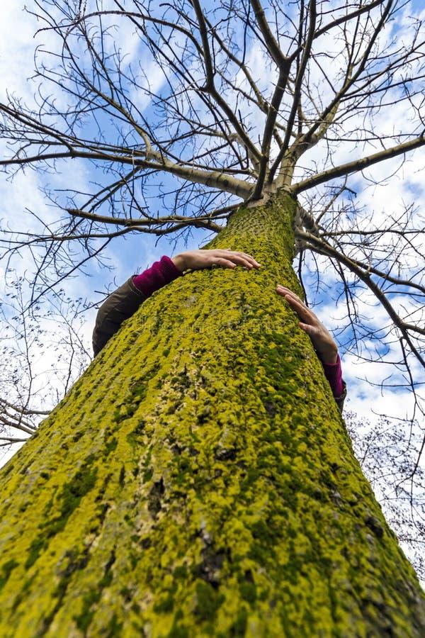 Ecologo del hugger dell'albero fotografie stock