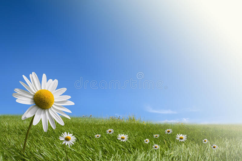 Ecology and environment concepts. Green meadow and blue sky background with copy space. Differential focus royalty free stock image
