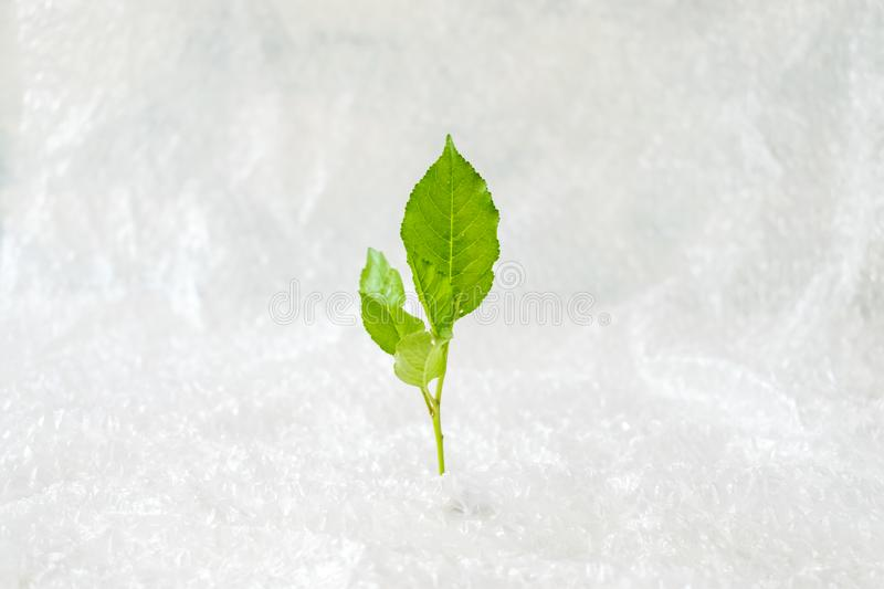 Ecology, Environment pollution concept. Green plant in bubble wr. Ap on white background. Plastic Packaging and the Environment stock photo