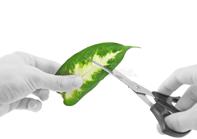 Download Ecology -green Leaf In Glass Of Water. Royalty Free Stock Photography - Image: 22890087