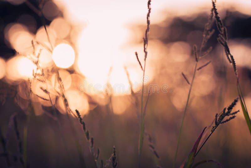 Wildflower autumn season nature landscape with sunset royalty free stock photo