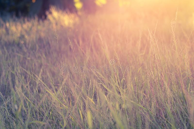 Wildflower autumn season nature landscape with sunset royalty free stock images