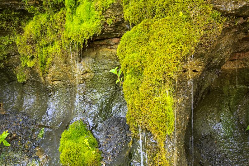 Ecology and nature. The source of clean drinking spring water among stone rocks and moist fresh green moss. Spring. `Wailing Wall` in the Saratov region village stock image