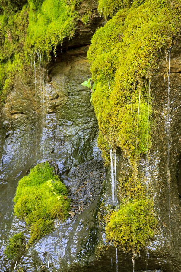 Ecology and nature. The source of clean drinking spring water among stone rocks and moist fresh green moss. Spring. `Wailing Wall` in the Saratov region village royalty free stock image
