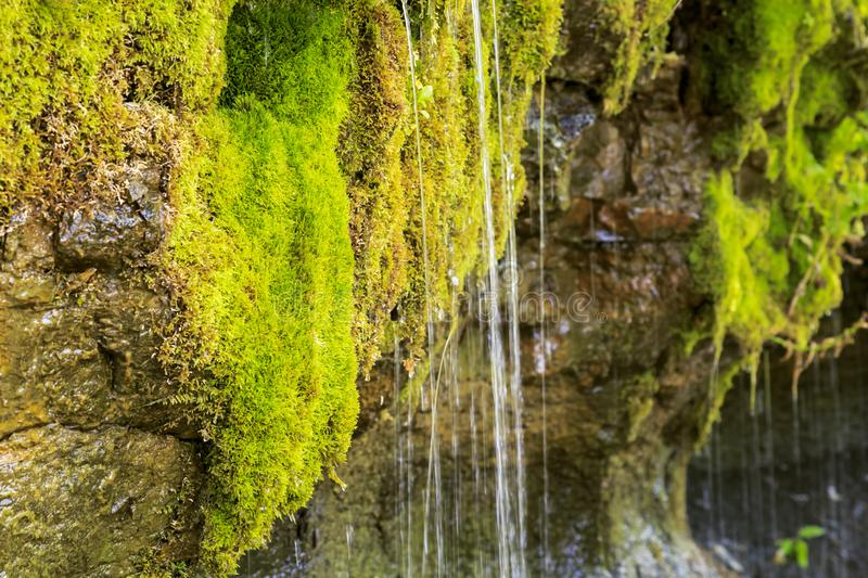 Ecology and nature. The source of clean drinking spring water among stone rocks and moist fresh green moss. Spring. `Wailing Wall` in the Saratov region village royalty free stock images