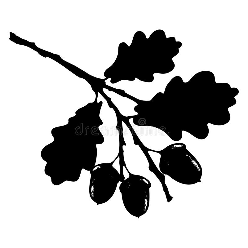 Oak leaf, acorn and branch isolated silhouette, ecology stylized royalty free illustration