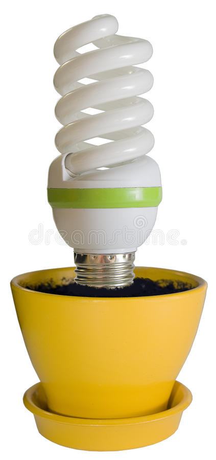 Economical bulb in a flower pot. Economical bulb growing in a yellow flower pot royalty free stock photo