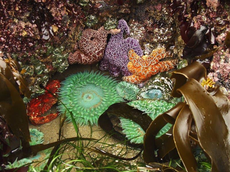 Ecosistema del raggruppamento di marea immagini stock libere da diritti