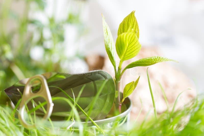 Ecosistema di ecologia dell'immondizia e concetto di adattamento con latta e la pianta immagini stock