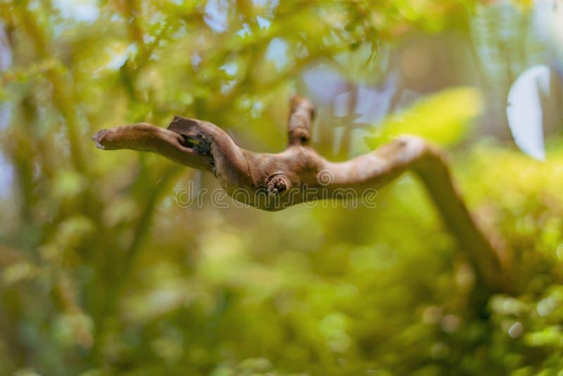 Ecossistema aquático f dos animais selvagens da erva daninha do mar do mundo subaquático fotos de stock