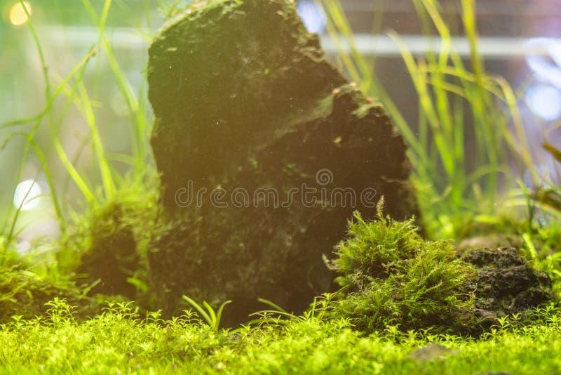 Ecossistema aquático f dos animais selvagens da erva daninha do mar do mundo subaquático foto de stock royalty free