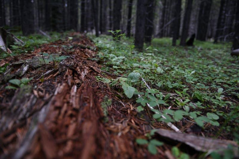 Ecosysteem van de bosbodem, ontrooiende bomen en vegetatie royalty-vrije stock foto