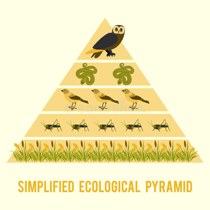 Ecosystem energy flow. Simplified ecological pyramid stock illustration