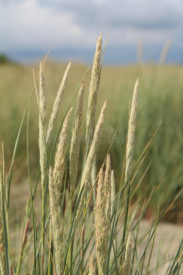 Ecosystem, Grass Family, Rye, Grass Free Public Domain Cc0 Image