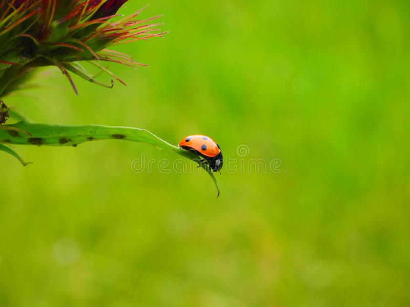 Ecosystem, Insect, Grass, Bird stock images