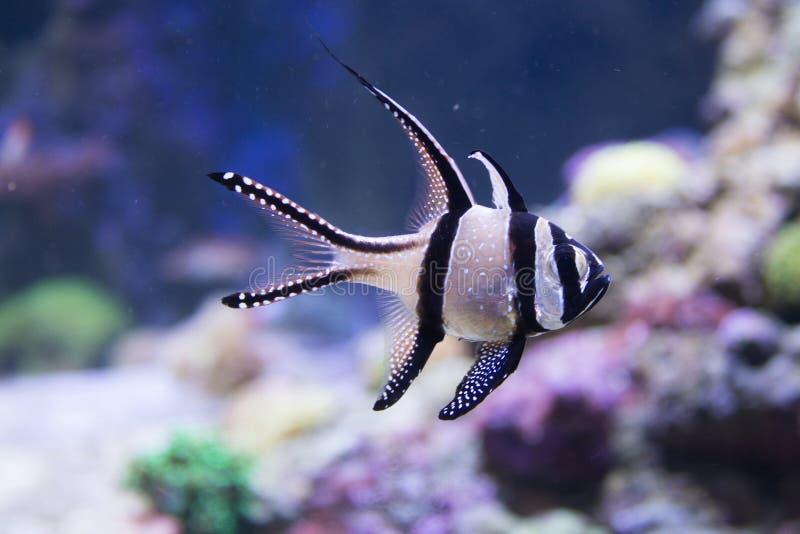 Ecosystem, Marine Biology, Organism, Fish stock image