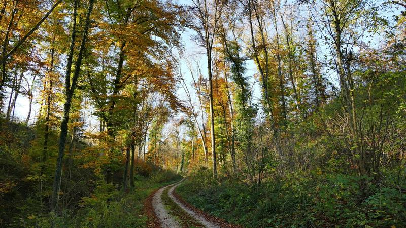 Ecosystem, Temperate Broadleaf And Mixed Forest, Path, Nature Reserve stock photos