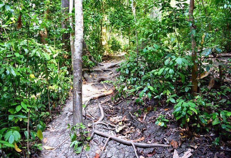 Ecoturismo - Trekking através da floresta tropical tropical sempre-verde - praia do elefante, ilha de Havelock, ilhas de Andaman, fotografia de stock