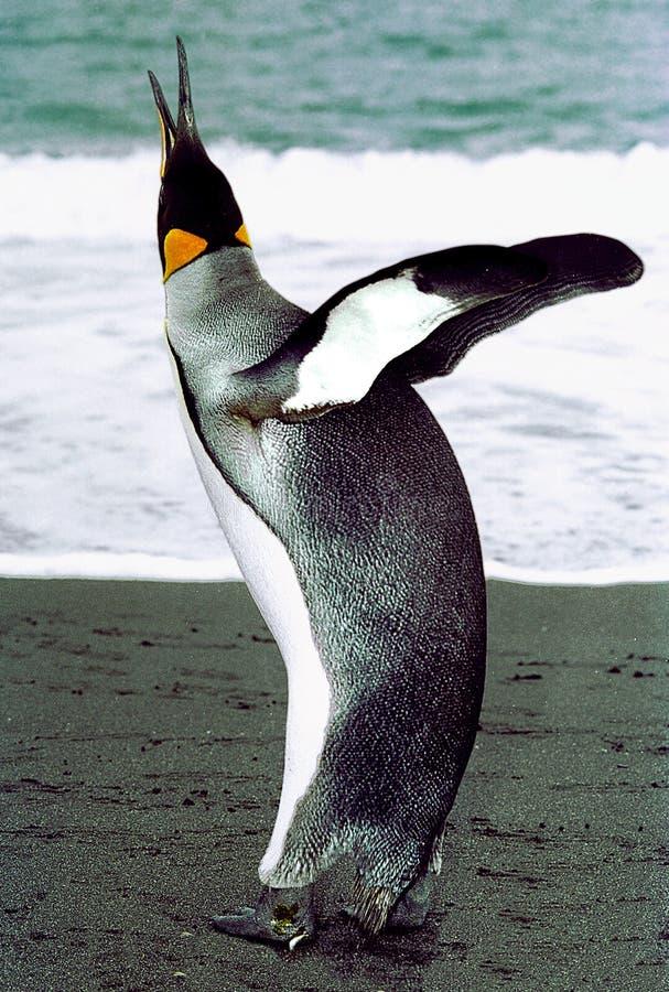 Download Ecstasy stock image. Image of avian, joyful, claps, king - 93787