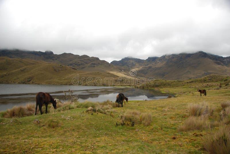 Ecuadorian national park royalty free stock images