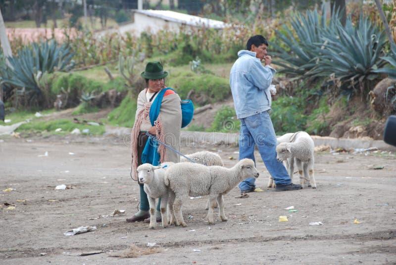 Ecuatoriaanse vrouw met weinig schapen stock foto's