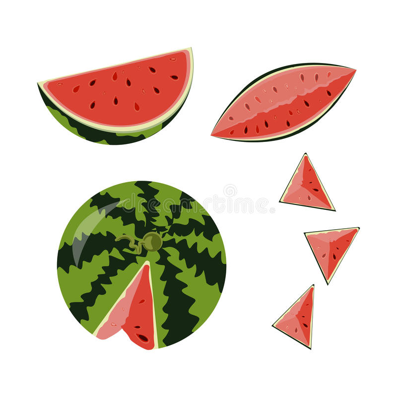 Ed fruit watermelon. Vector illustration of whole ripe red fruit watermelon, cut half, sliced slice berry with red flesh isolated on white background vector illustration