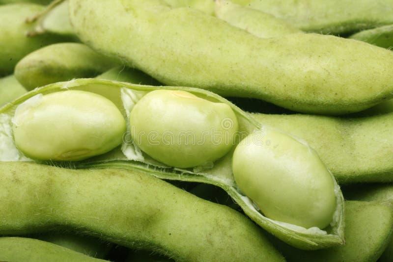 Download Edamame stock photo. Image of beans, close, edamame, bean - 14096136