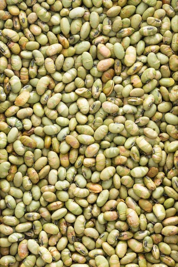 Edamame Bean Seeds secado abundancia para el fondo imágenes de archivo libres de regalías