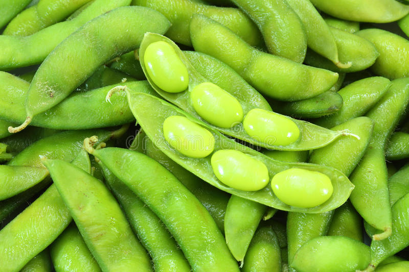 Edamame nibbles, boiled green soy beans, japanese stock photos