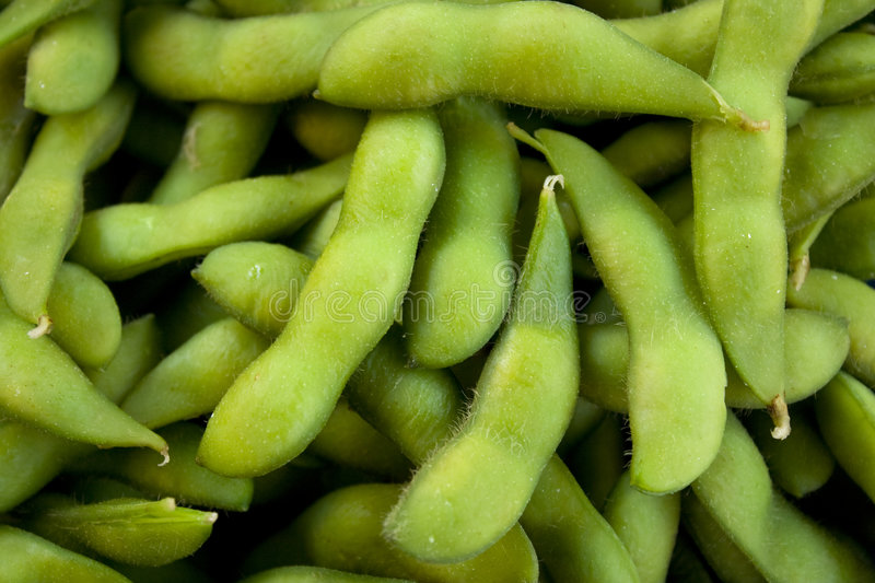 Edamame or Soybeans royalty free stock photo