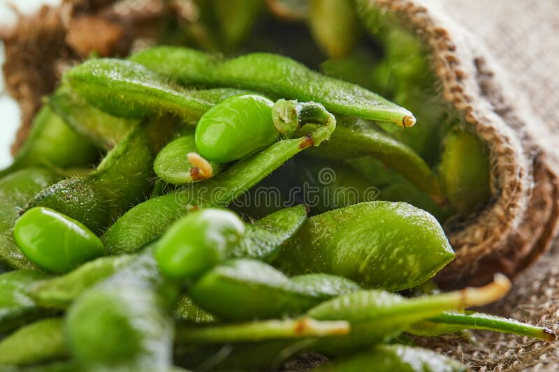 Edamame or soybeans spill out of the bag onto a brown sackcloth royalty free stock image