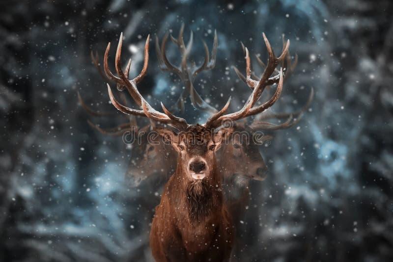 Edel hertenmannetje in de bos Multiblootstelling van de de wintersneeuw stock foto's