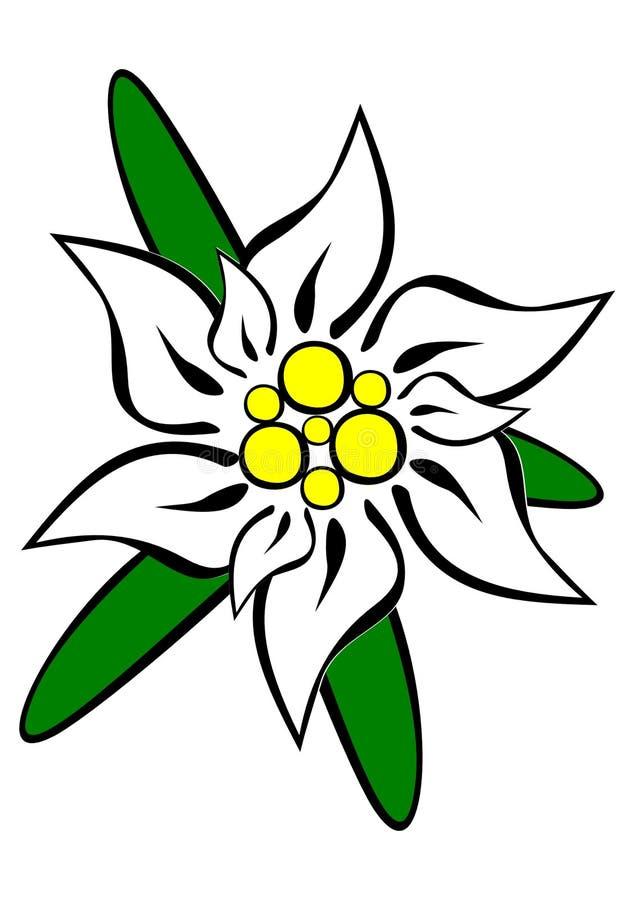 говорю цветок эдельвейс картинки на прозрачном фоне запечённые котлеты одинаково