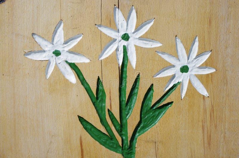 edelweiss royalty-vrije stock afbeeldingen