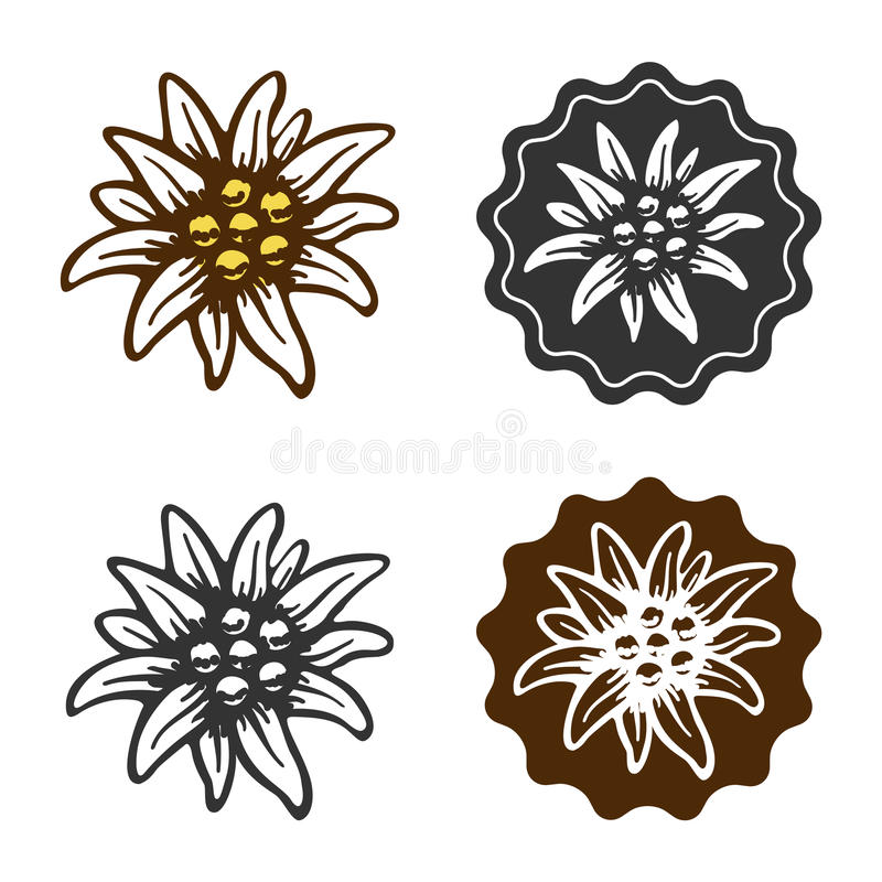 Edelweiss flower symbol alpinism alps germany logo royalty free illustration