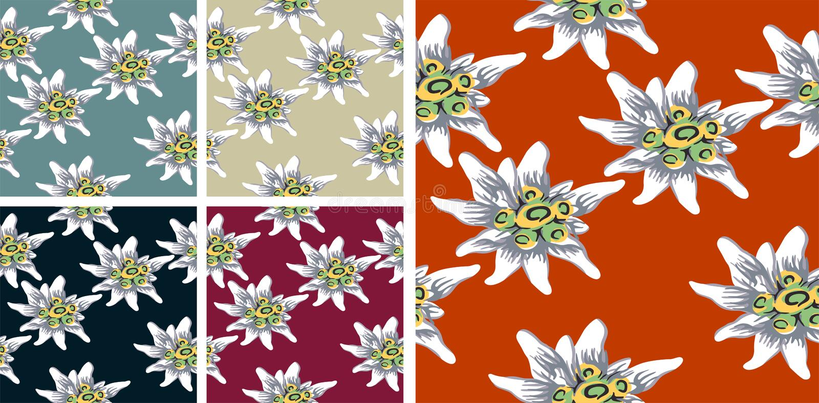 Edelweiss pattern pack vector illustration
