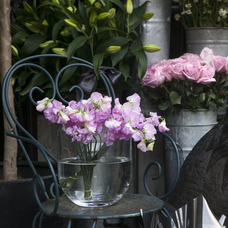Edelwicke, Lathyrus odoratus, Blumen lizenzfreie stockbilder
