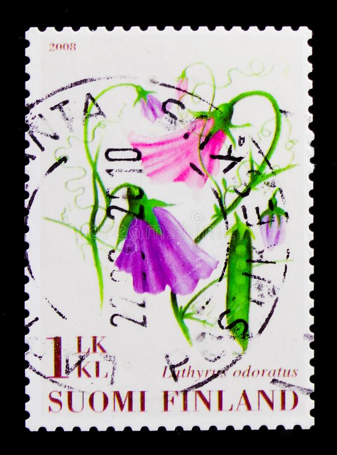 Edelwicke Lathyrus odoratus, Blumen serie, circa 2008 stockfotos
