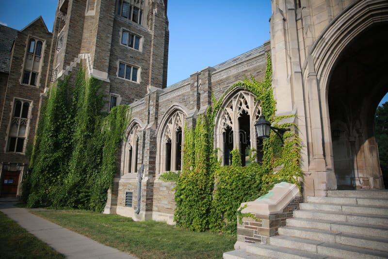 Edera a Cornell University immagine stock