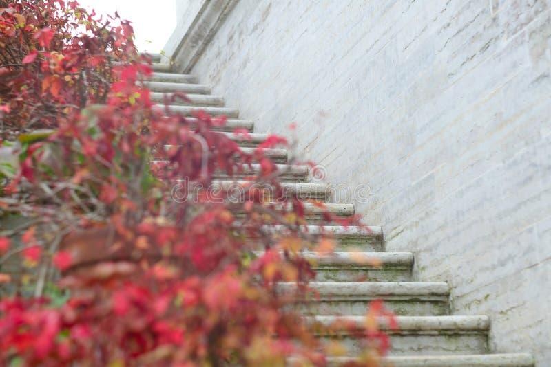 Edera rossa di autunno sulle scale fotografia stock