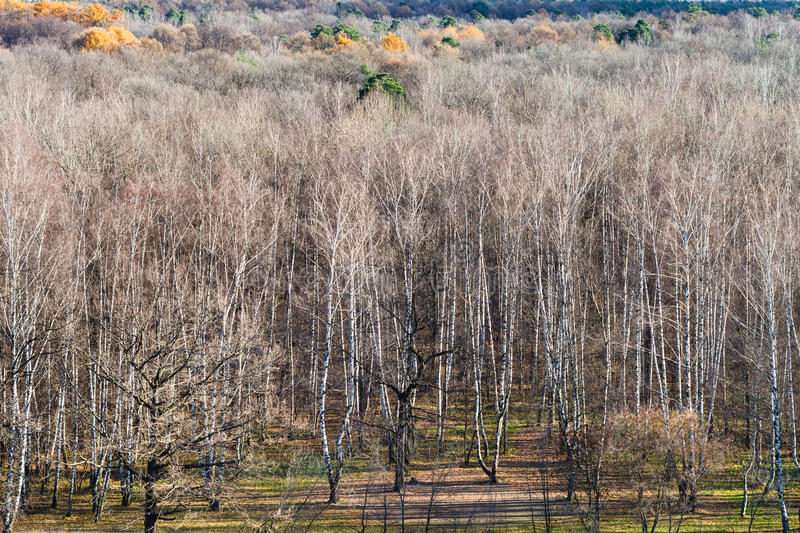 Edge of autumn forest wtih bare trees stock image