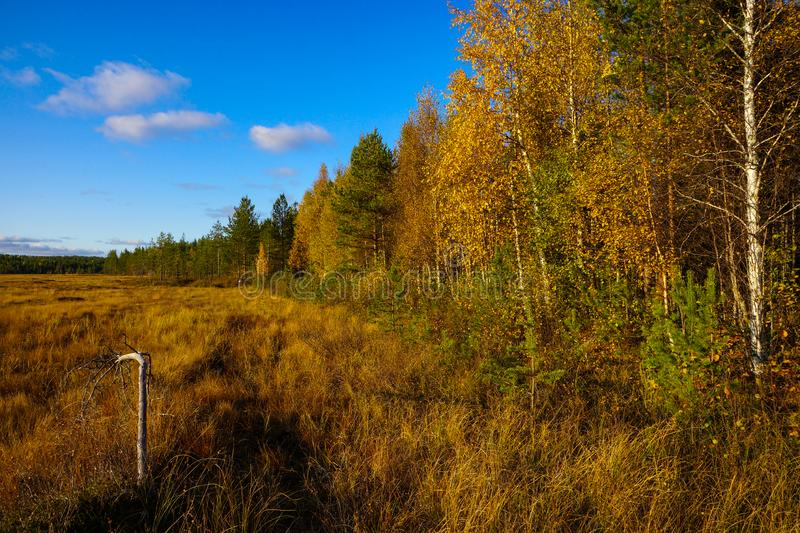 Edge of colorful swamp in autumn Lapland, Finland stock images