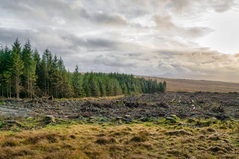 The Edge de un bosque del tre del pino fotografía de archivo