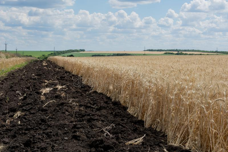 The edge of the field with a ripened grain crop, with a plowed land in order of safety from fire. royalty free stock photography